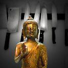 the butcher's buddha by carol brandt