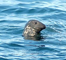 Grey Seal by yeimaya