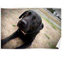 Trigger dog Poster