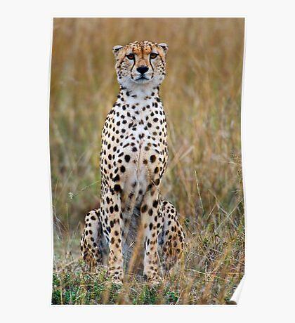 Masai Mara Treasure-Cheetah Poster