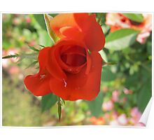 Patent Red Rose Poster