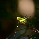 Spot Light by vasu