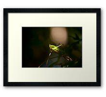 Spot Light Framed Print