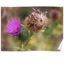 in the thistle patch Poster