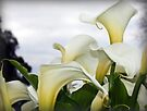 ~It's all about Lily~ by Lynda Heins