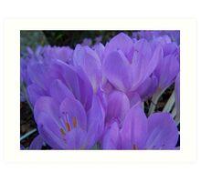 Purple Flowers In Garden Art Print