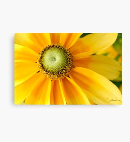 Sunny Side Up! Canvas Print