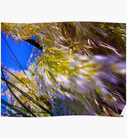 bush at Rudee Inlet Poster