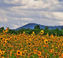 Sunflowers Smiling by Janette  Kimbrough