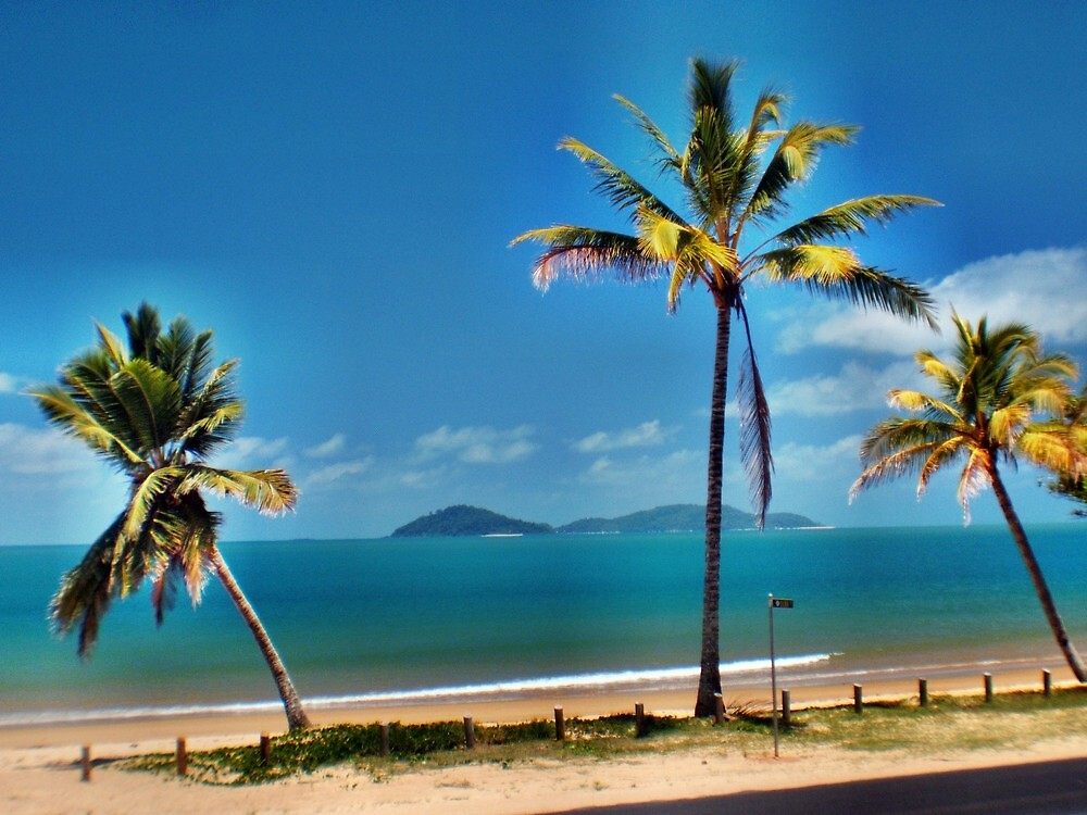 Bedarra Island through the coconut palms. by Mission-Beach