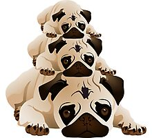 Stack of Pugs Photographic Print