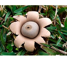 Earth Star, Photographic Print