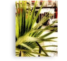 Greenwich Palm Canvas Print