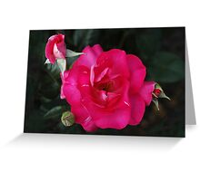 Phases of Life...Rose Greeting Card