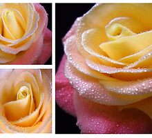 Yellow - Pink Rose. Collage. by Vitta