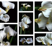 Arums by Magee