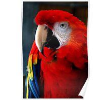 Carter's Parrot Poster