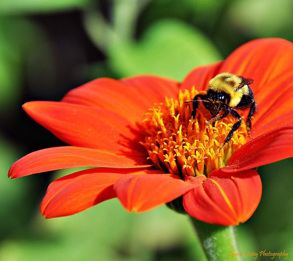Bee by Lyana Lynn