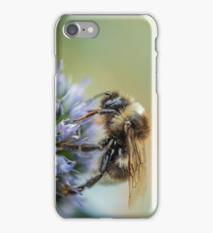Bee on Sea Holly Flower iPhone Case/Skin
