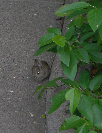 Urban Rabbit by Kim  Lambert
