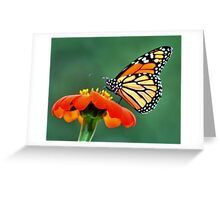 Monarch on a Mexican Sunflower Greeting Card