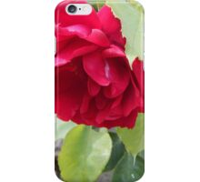beautiful bright pink rose iPhone Case/Skin