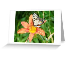Tiger Swallowtail on Tiger Lily Greeting Card