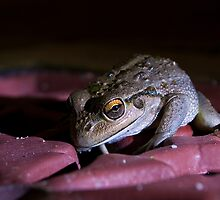 Night Stalker by GerryMac
