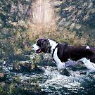 The Spaniel by Judi Taylor