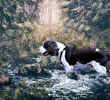 The Spaniel by Judi Taylor