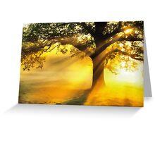 Tree basking in sunshine  Greeting Card