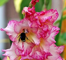 Pink Home For Mr. Bumble by Kat Miller