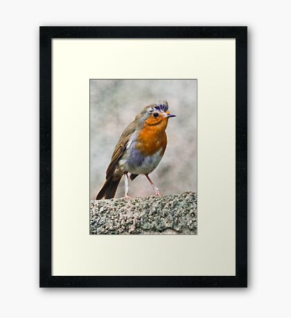 Bad Hair Day or What Framed Print