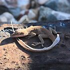 lizard shedding its skin by chasityperry