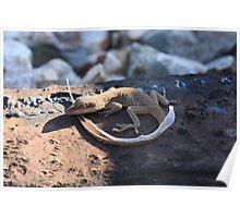 lizard shedding its skin Poster