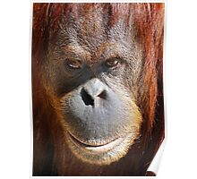 A Thoughtful Orang-utan Poster