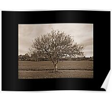 Apple Tree Poster