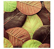 Brown Leaf Pattern Photographic Print