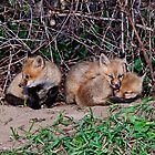 Fox Kits 5 by Michael Cummings