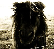 Bad Hair Day by Anita Orheim