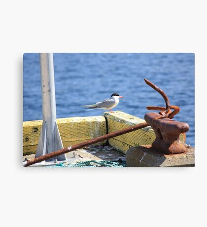 Sitting On The Dock Of The Bay - Arctic Tern Canvas Print