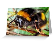 Buff Tailed Bumble Bee Greeting Card