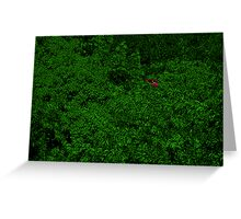 Red Car Green Trees Greeting Card