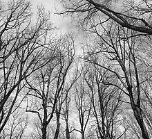 Branching by Milos Markovic