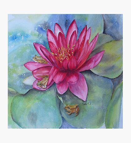 Water lily hide and seek Photographic Print