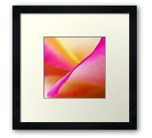 A Rosy Glow Framed Print