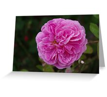 Pretty Pink Peony Greeting Card