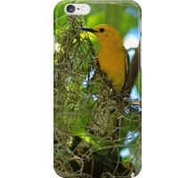 Prothonotary Warbler iPhone Case/Skin