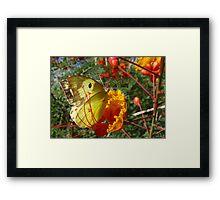 Butterfly ~ Southern Dogface Framed Print