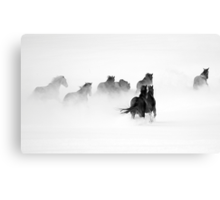After the Blizzard B&W Canvas Print